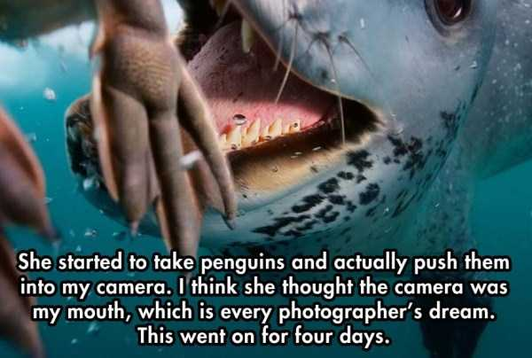 close-enounter-with-leopard-seal (8)