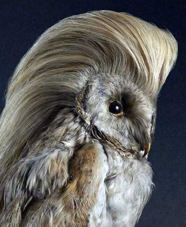 examples-of-bad-taxidermy (10)