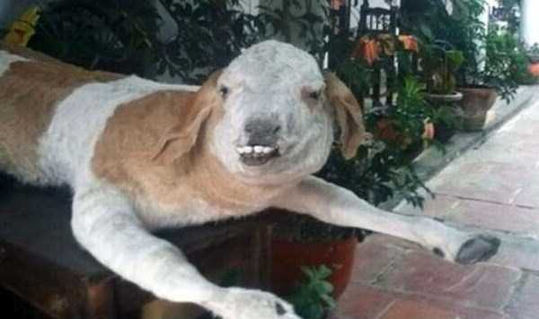 examples-of-bad-taxidermy (14)