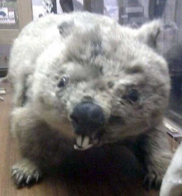 examples-of-bad-taxidermy (15)