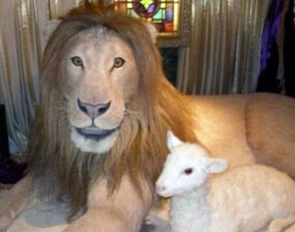 examples-of-bad-taxidermy (16)