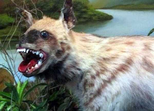 examples-of-bad-taxidermy (17)