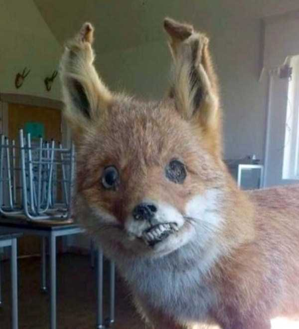 examples-of-bad-taxidermy (2)