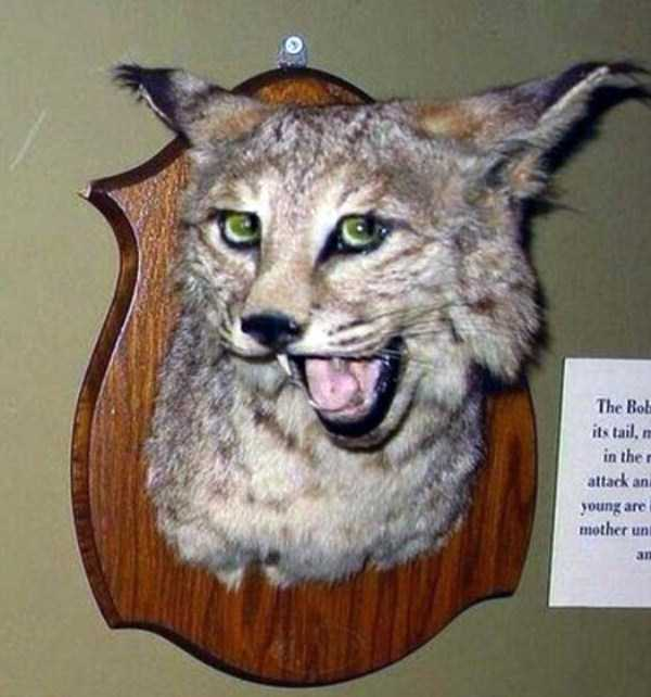 examples-of-bad-taxidermy (20)