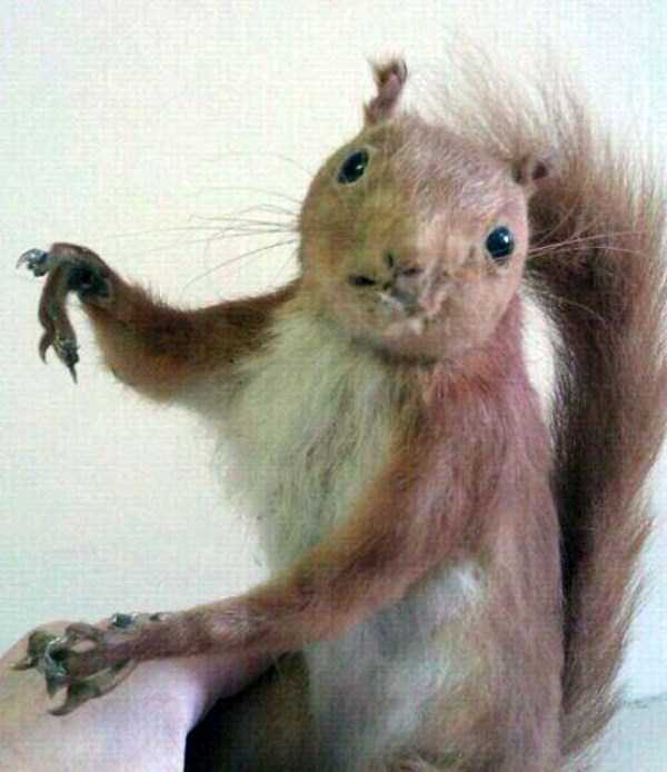 examples-of-bad-taxidermy (21)