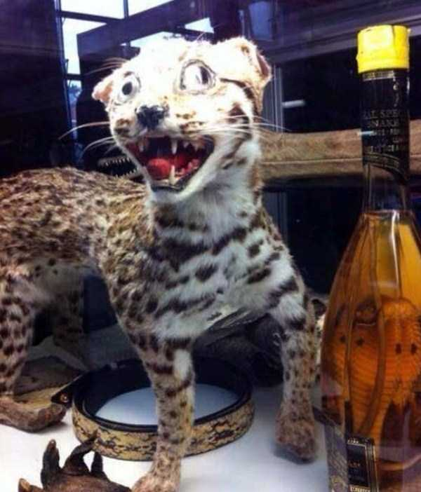 examples-of-bad-taxidermy (22)