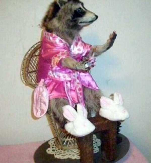 examples-of-bad-taxidermy (23)