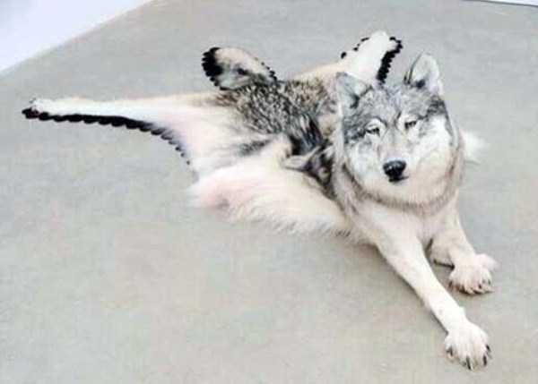 examples-of-bad-taxidermy (25)