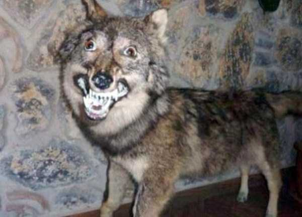examples-of-bad-taxidermy (28)