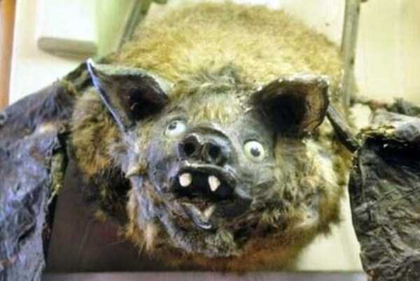 examples-of-bad-taxidermy (29)
