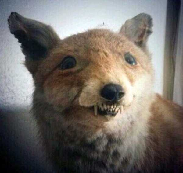 examples-of-bad-taxidermy (3)