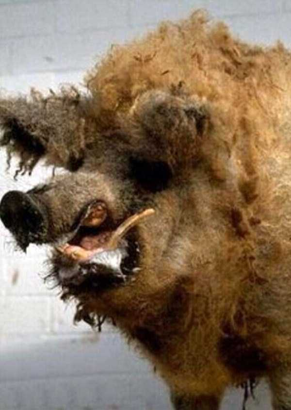 examples-of-bad-taxidermy (30)
