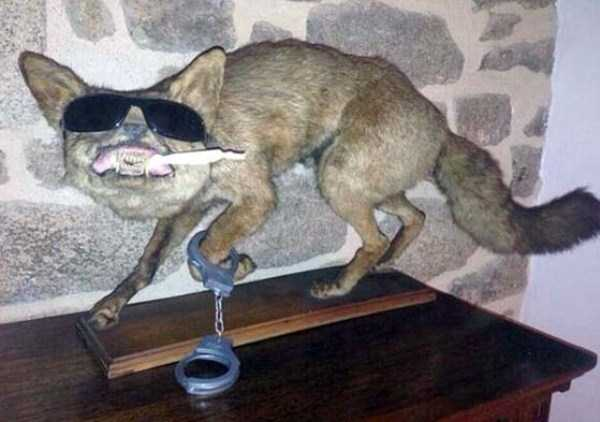 examples-of-bad-taxidermy (4)