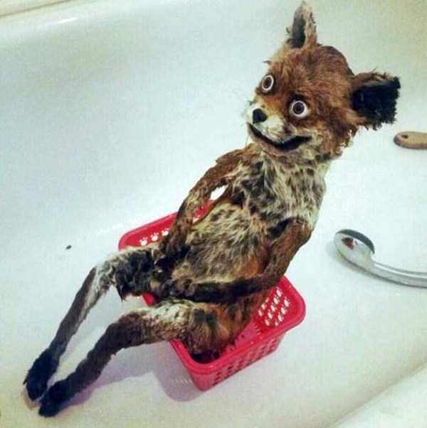 examples-of-bad-taxidermy (5)