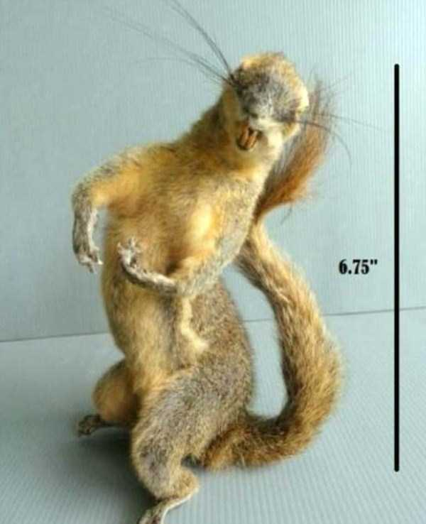 examples-of-bad-taxidermy (6)