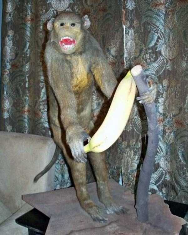 examples-of-bad-taxidermy (7)