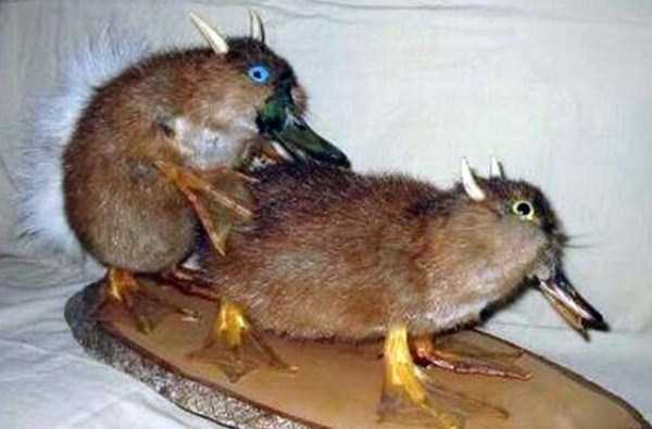 examples-of-bad-taxidermy (8)