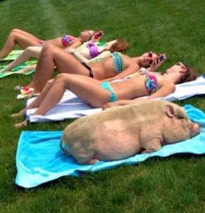 There Are Impostors Out There (26 photos) 22