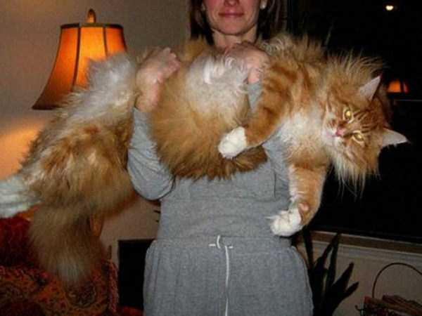 giant-domestic-cats (1)