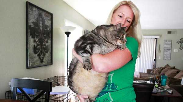 giant-domestic-cats (10)