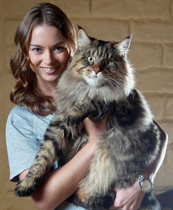 giant-domestic-cats (26)