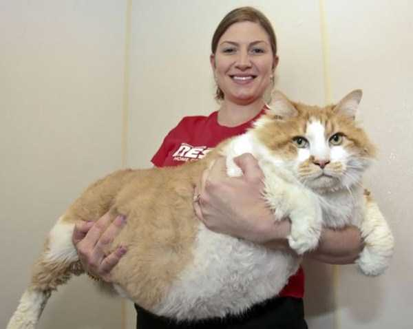 giant-domestic-cats (28)