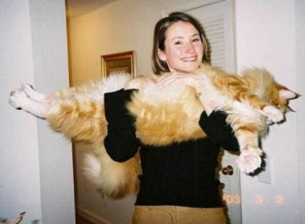 giant-domestic-cats (4)