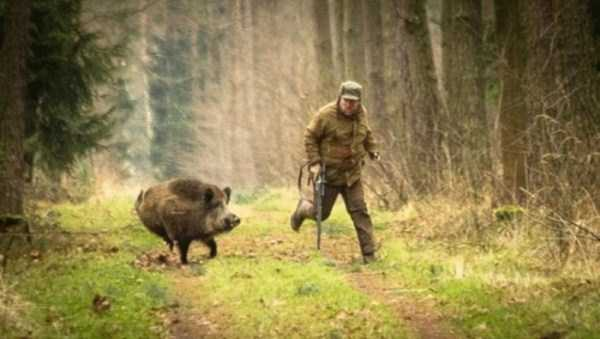 hunting-wild-boar (1)