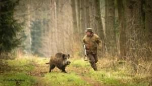 When Hunter Becomes Prey (7 photos) 3