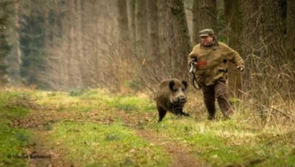 hunting-wild-boar (4)