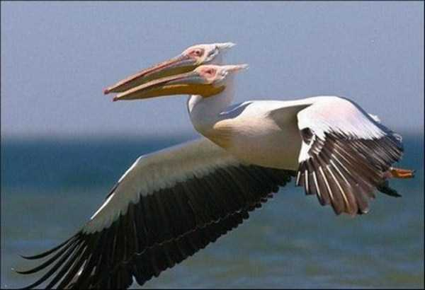 perfectly-timed-animal-photos (54)