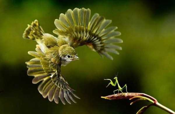 perfectly-timed-animal-photos (61)