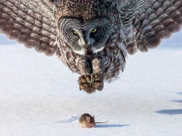 perfectly-timed-animal-photos (75)