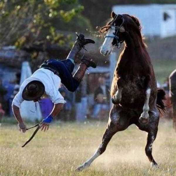 perfectly-timed-photos (10)