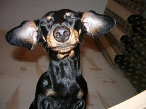 Funny Dogs are Always Good Mood Boosters (55 photos) 1