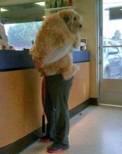 Funny Dogs are Always Good Mood Boosters (55 photos) 12