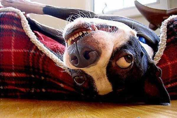 photos-of-funny-dogs (23)