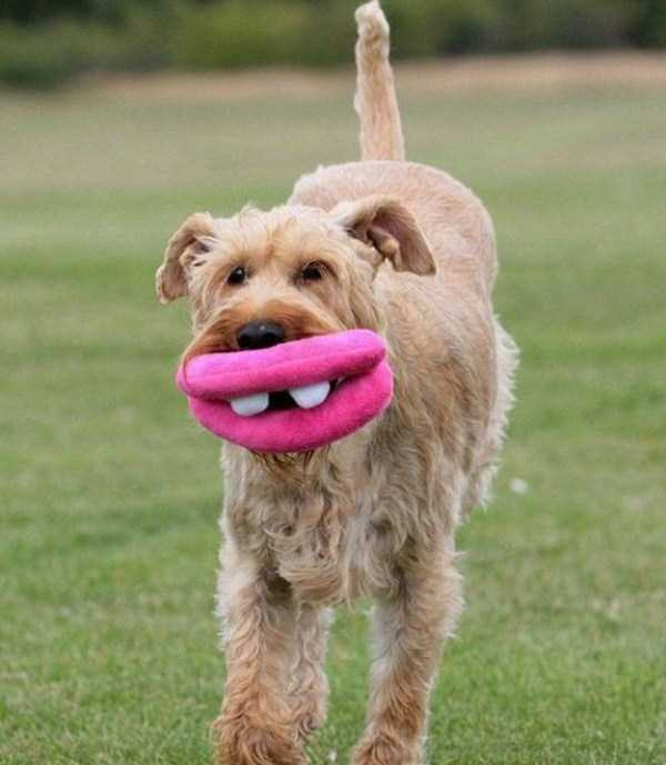 photos-of-funny-dogs (27)