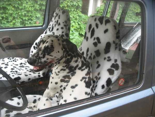photos-of-funny-dogs (29)