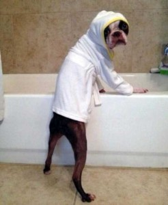 Funny Dogs are Always Good Mood Boosters (55 photos) 37