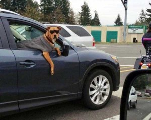 Funny Dogs are Always Good Mood Boosters (55 photos) 38