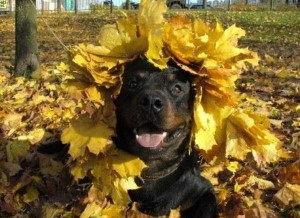 Funny Dogs are Always Good Mood Boosters (55 photos) 43