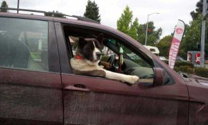 Funny Dogs are Always Good Mood Boosters (55 photos) 48