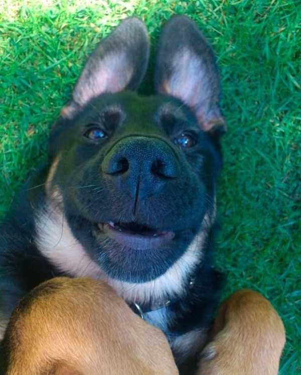 photos-of-funny-dogs (5)