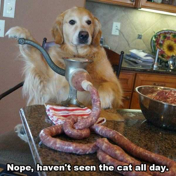 pictures-with-funny-captions (53)