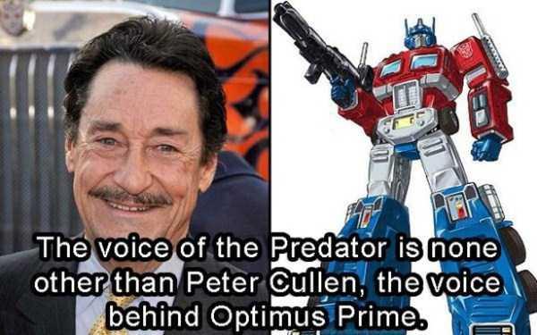 predator-facts (16)