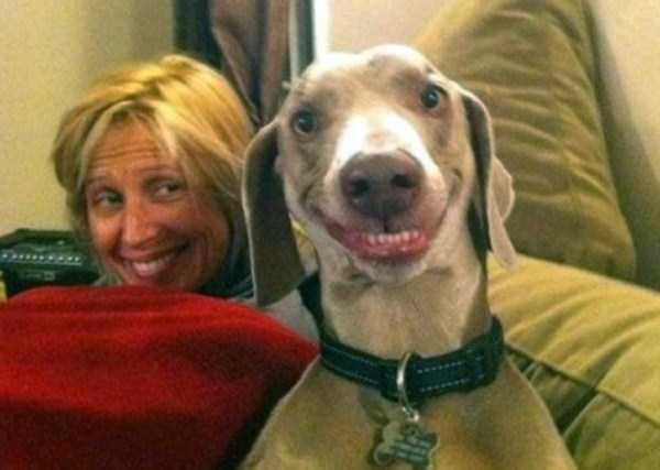 smiling-animals (1)