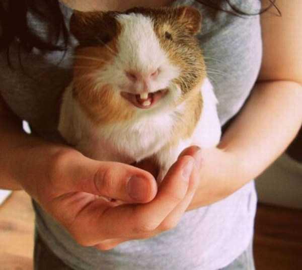 smiling-animals (10)