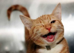 Animals With the Most Adorable Smiles (43 photos) 11