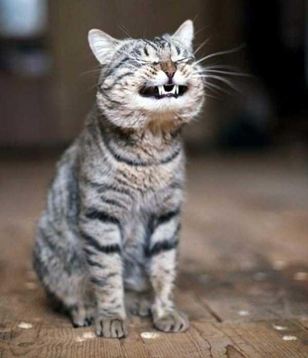 smiling-animals (13)